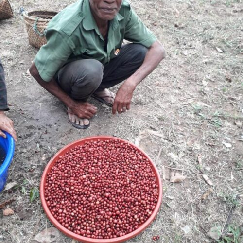 Coffee cherries and a producer from Bali