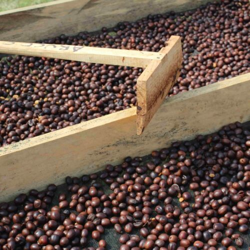 Honduras Lempira coffee