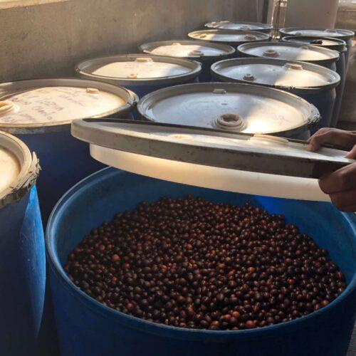 Honduras coffee lempira