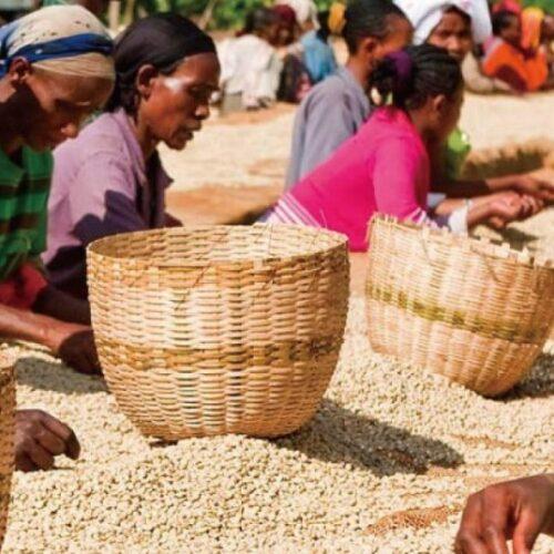 Ethiopia Ambaye coffees